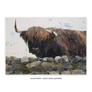 """Freya"" The Highland Cow from Applecross A3 Unframed Art Print - Andy Thomas Artworks"