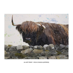 """Freya"" The Highland Cow from Applecross A4 Unframed Art Print - Andy Thomas Artworks"