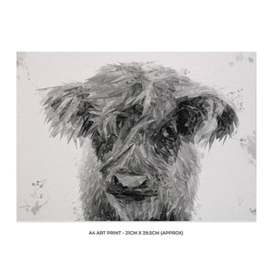 """Peeps"" The Highland Calf (B&W) A4 Unframed Art Print"