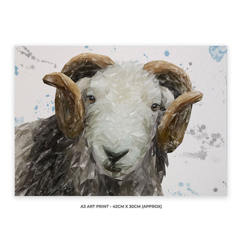 """Stanley"" The Herdwick Ram A3 Unframed Art Print"