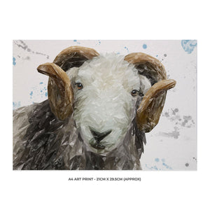 """Stanley"" The Herdwick Ram A4 Unframed Art Print - Andy Thomas Artworks"