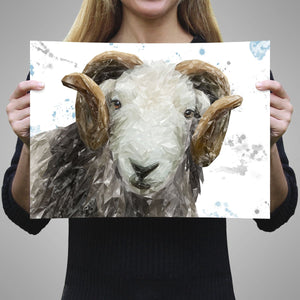 """Stanley"" The Herdwick Ram A3 Unframed Art Print - Andy Thomas Artworks"