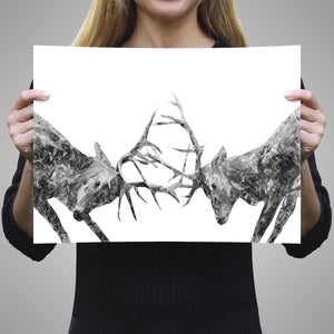 """The Showdown"" Rutting Stags (B&W) A1 Unframed Art Print - Andy Thomas Artworks"