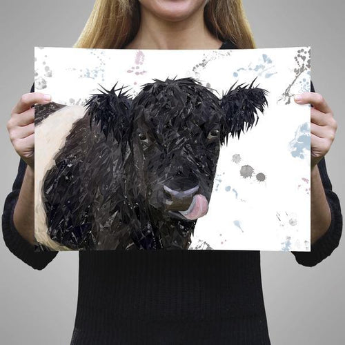 """Eugene"" The Belted Galloway Cow A1 Unframed Art Print"