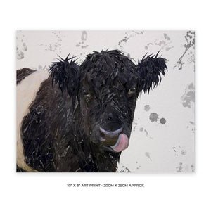 """Eugene"" The Belted Galloway Cow (Grey Background) 10"" x 8"" Unframed Art Print - Andy Thomas Artworks"