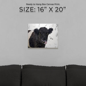 """Eugene"" The Belted Galloway Cow (Grey Background) Small Canvas Print - Andy Thomas Artworks"