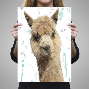 """Alice"" The Alpaca A3 Unframed Art Print - Andy Thomas Artworks"