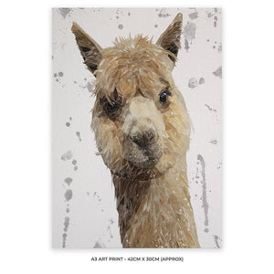 """Alice"" The Alpaca (Grey Background) A3 Unframed Art Print - Andy Thomas Artworks"