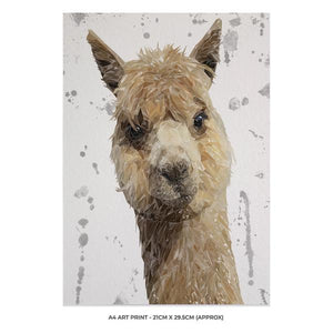 """Alice"" The Alpaca (Grey Background) A4 Unframed Art Print - Andy Thomas Artworks"