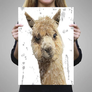 """Alice"" The Alpaca (Grey Background) A1 Unframed Art Print - Andy Thomas Artworks"