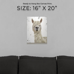"""Rowland"" The Alpaca (Grey Background) Small Canvas Print - Andy Thomas Artworks"