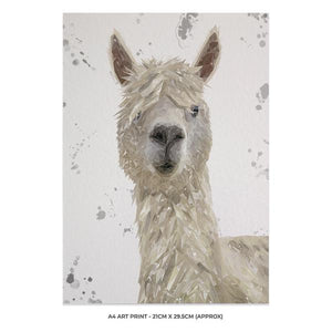 """Rowland"" The Alpaca (Grey Background) A4 Unframed Art Print - Andy Thomas Artworks"
