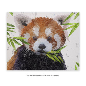 """Red"" The Red Panda 10"" x 8"" Unframed Art Print - Andy Thomas Artworks"