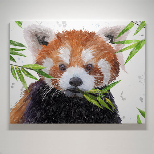 "NEW! ""Red"" The Red Panda Medium Canvas Print"