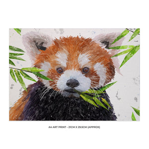"""Red"" The Red Panda A4 Unframed Art Print - Andy Thomas Artworks"