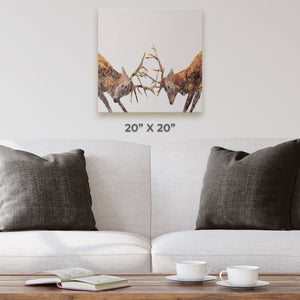 """The Showdown"" Rutting Stags Square Canvas Print - Andy Thomas Artworks"