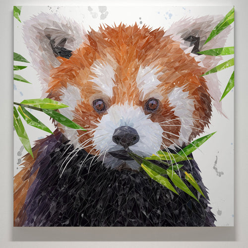 """Red"" The Red Panda Square Canvas Print"