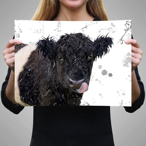 """Eugene"" The Belted Galloway Cow (Grey Background) Unframed Art Print"
