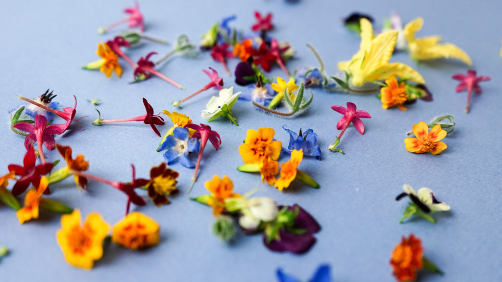 Making Pretty Plates With Edible Flowers