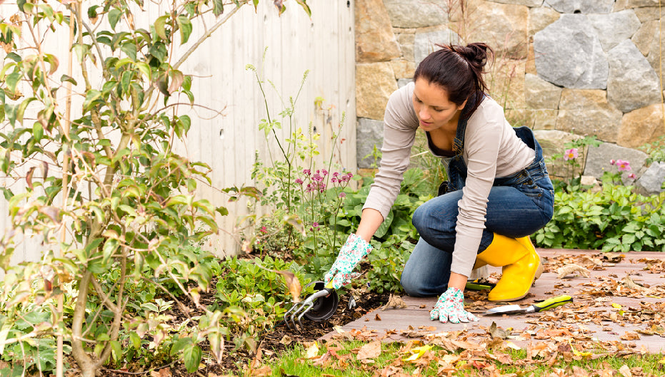 Transition Your Garden For Fall in 7 Steps