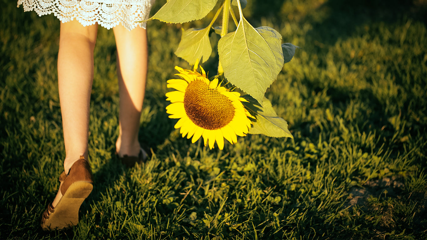 7 Tips For Growing a Sunflower Garden
