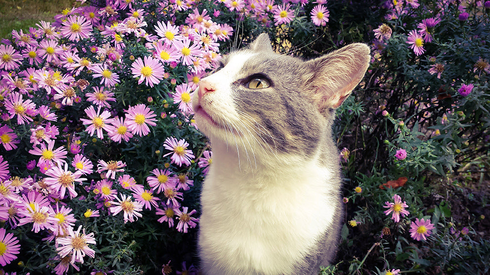 15 Cat Friendly Flowers and Herbs