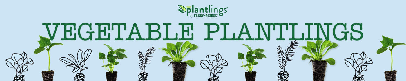 Vegetable Plantlings