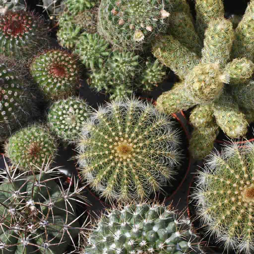 Cactus Mixed Varieties