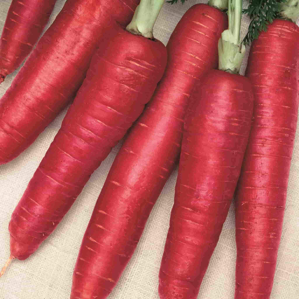 Carrot Atomic Red