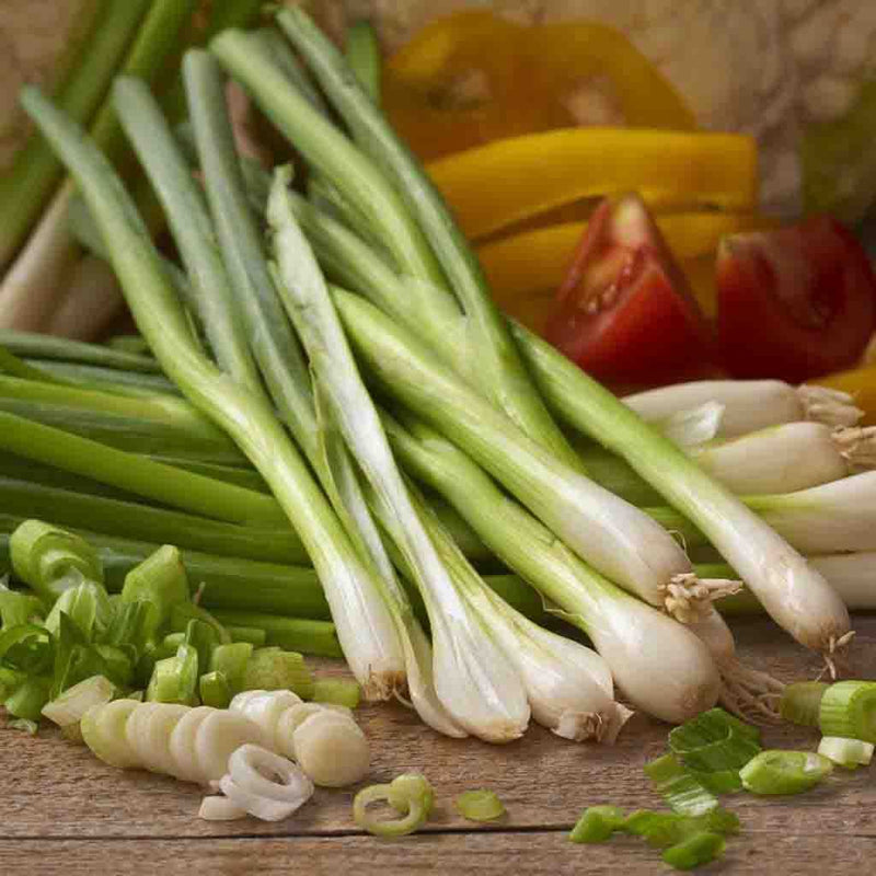 Onion White Lisbon Bunching (Sow Easy) Seed