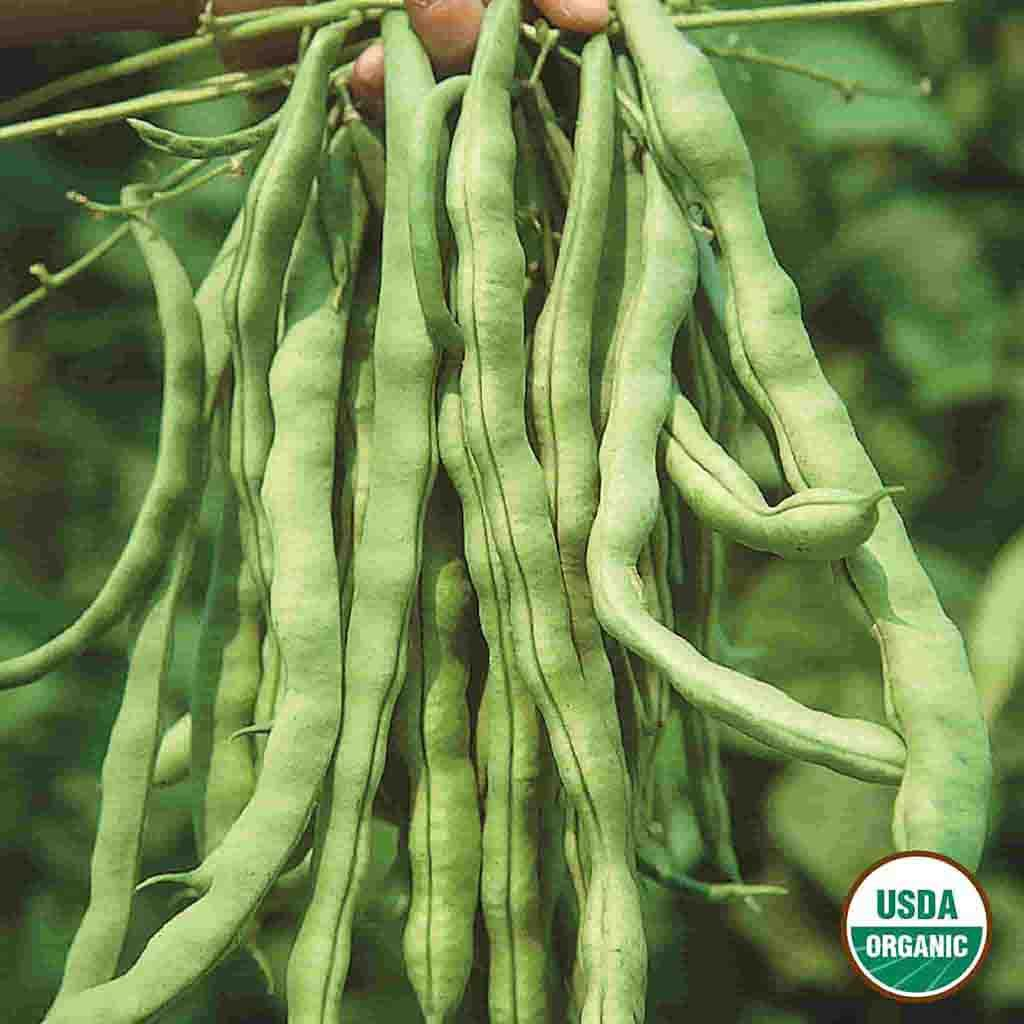 Organic Bean Garden Pole Kentucky Wonder Seed