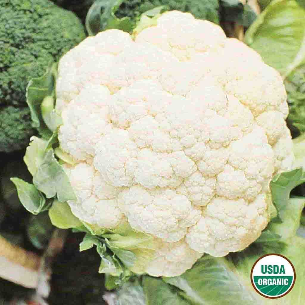 Organic Cauliflower Snowball Y
