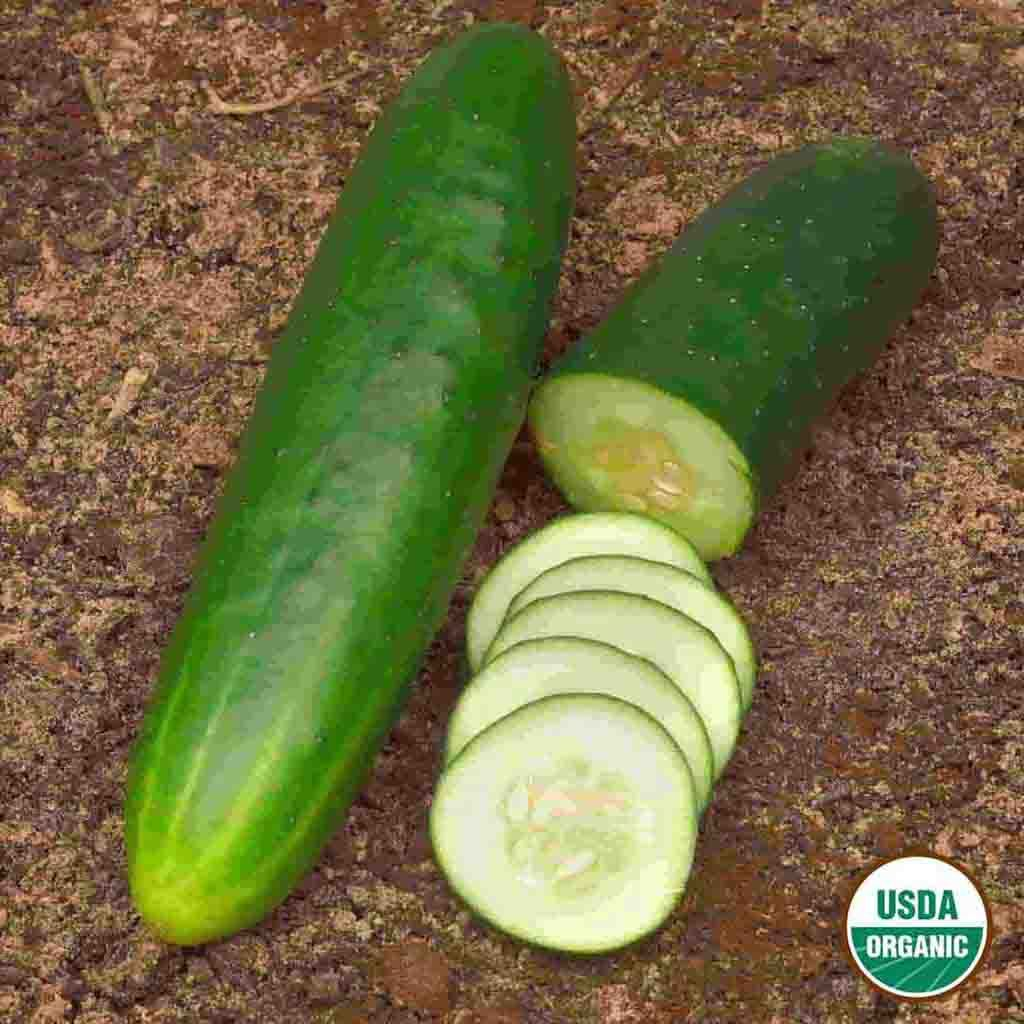 Organic Cucumber Straight Eight Seed