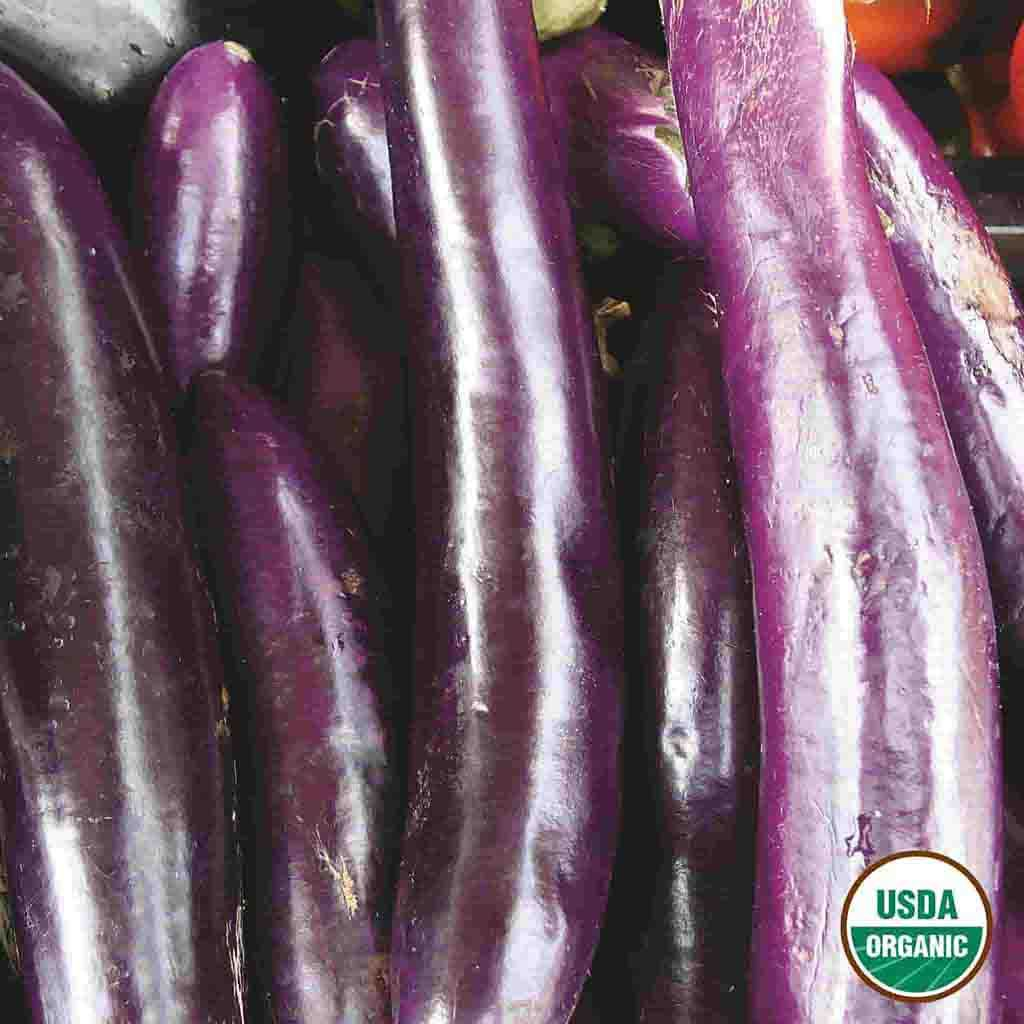Organic Eggplant Long Purple Early Seed