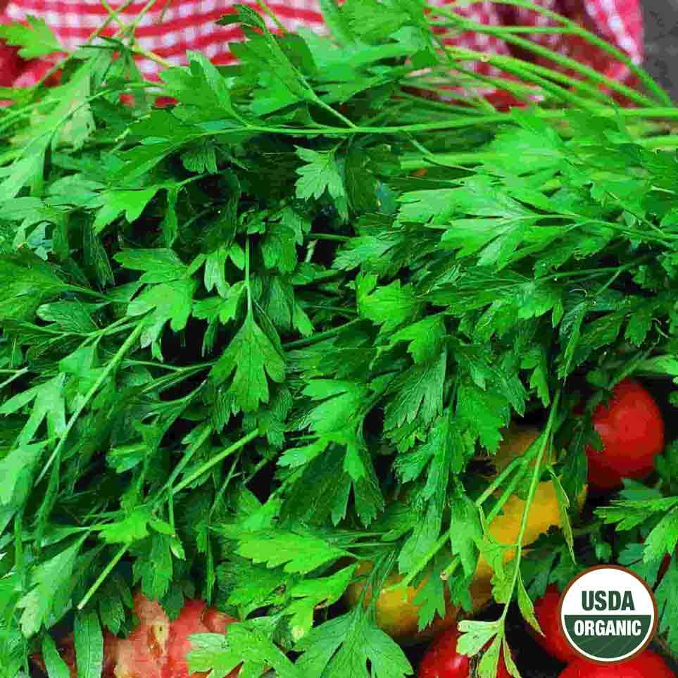 Organic Parsley Flat Leaf