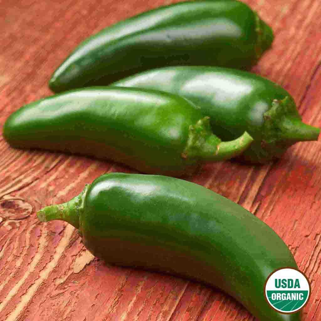 Organic Pepper Jalapeno Early Seed