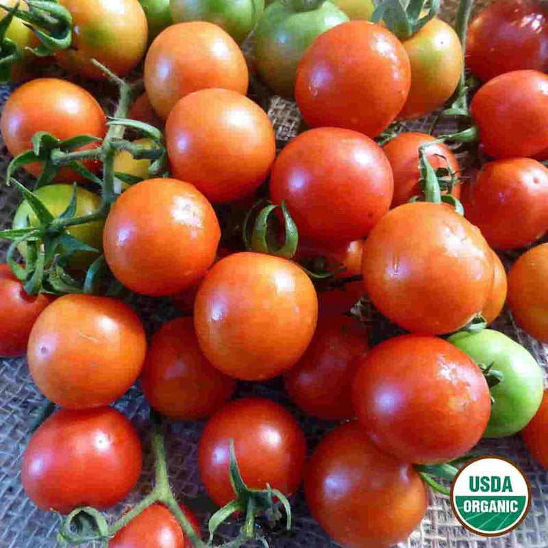 Organic Tomato Sweetie Seed