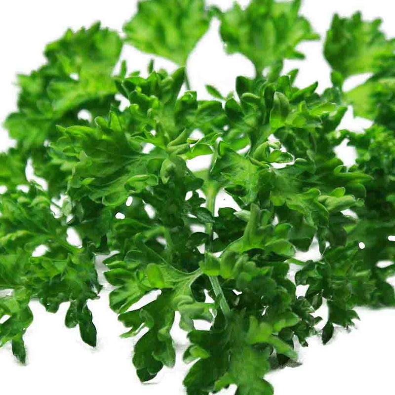 Parsley Extra Triple Curled Seed