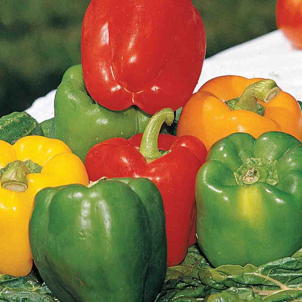 Pepper Bell Color Mix (Sow Easy) Seed