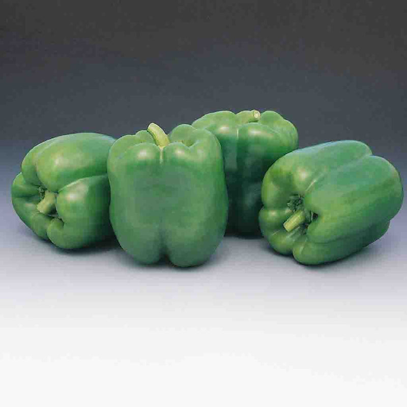 Pepper Garden Leader Monster Bell Seed