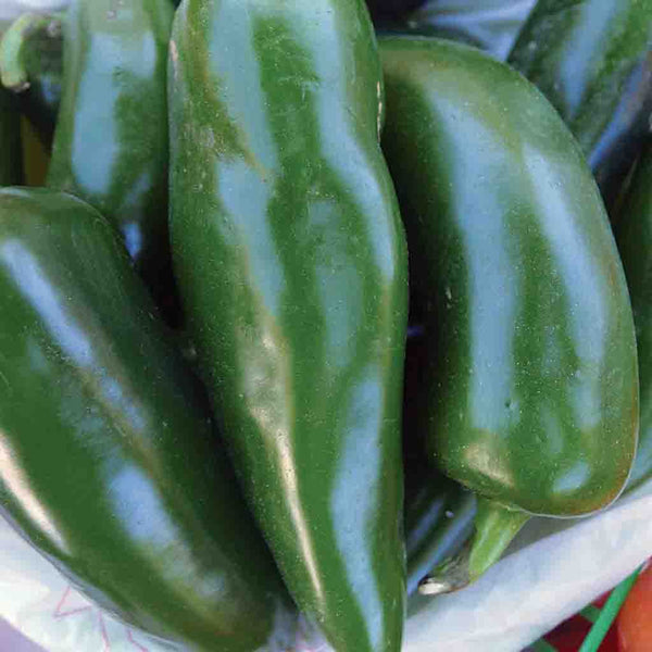 Pepper Seeds Tam Jalapeno Ferry Morse Home Gardening 202 S Washington St Norton Ma 02766
