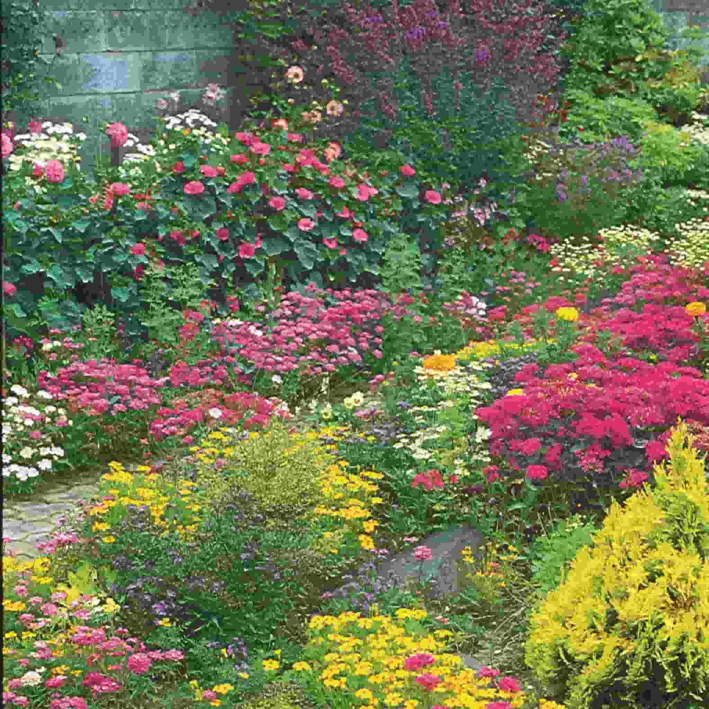 Wildflower Perennial Mix Seed Ferry Morse Home Gardening