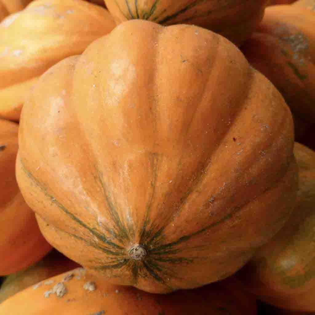Pumpkin Amish Pie HEIRLOOM Seed