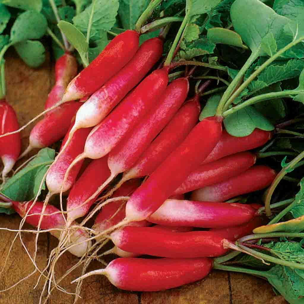 Radish French Breakfast Seed