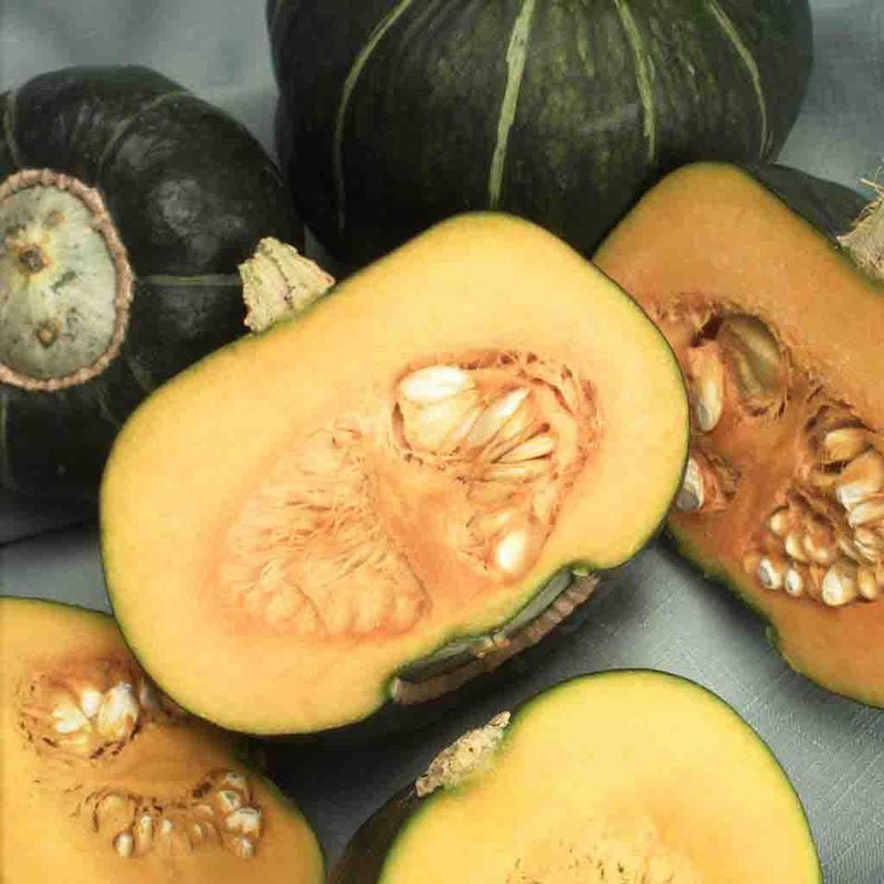 Squash Buttercup HEIRLOOM Seed