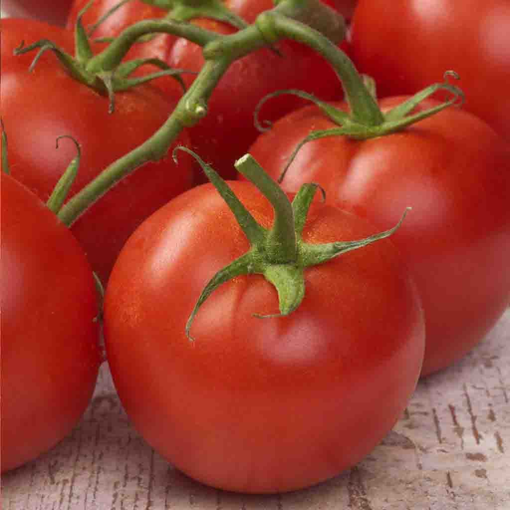 Tomato Abe Lincoln HEIRLOOM Seed