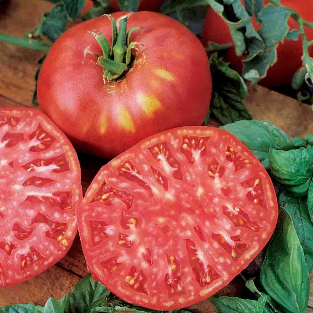 Tomato Brandywine Pink Fruited HEIRLOOM Seed