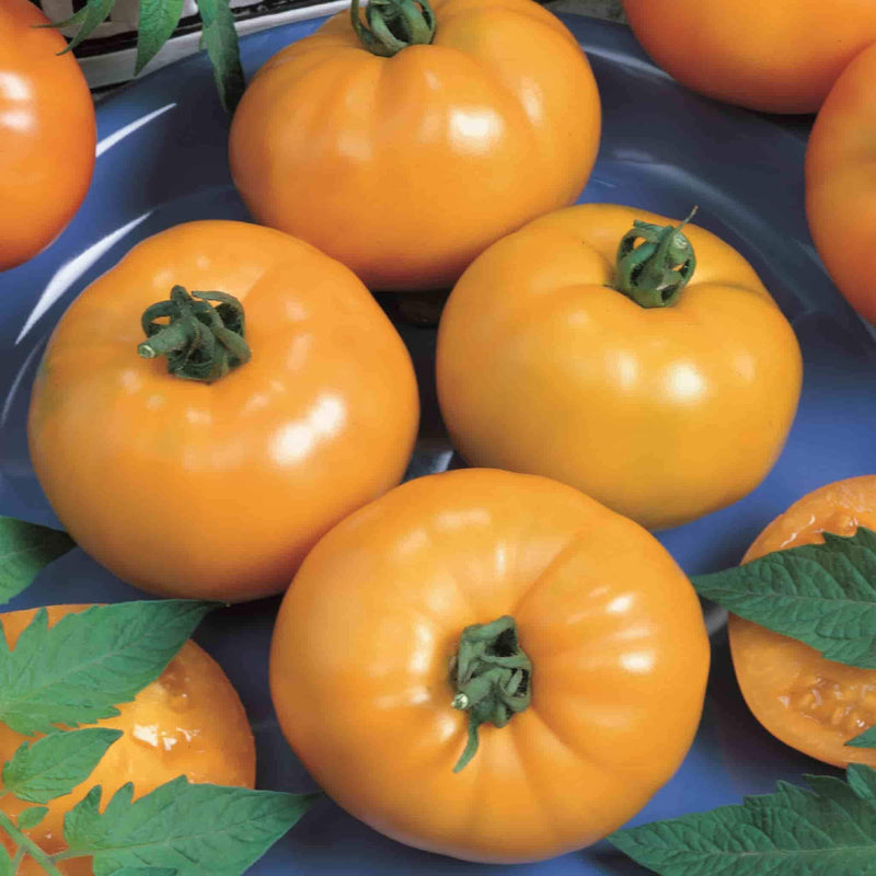 Tomato Container's Choice Yellow Hybrid