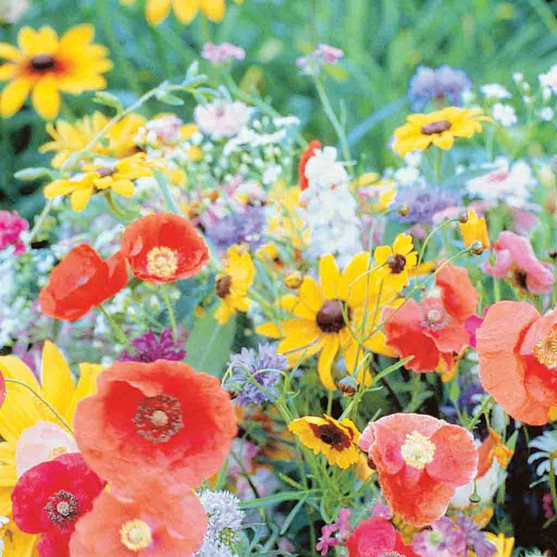 Wildflower Bird and Butterfly Mix Economy Packet Seed