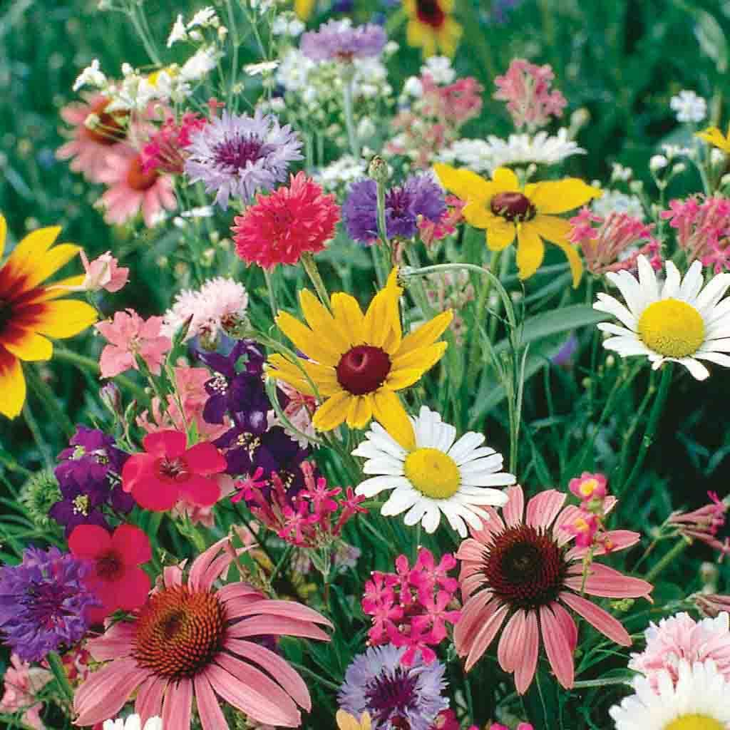 Wildflower Cutflower Mix Economy Packet Seed